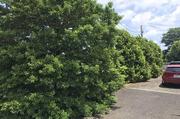 坂東市にて植栽伐採及び剪定作業 LS