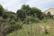 水戸市千波にて120坪あるお庭の植栽伐採作業|LS