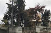 水戸市大串町にて軽量鉄骨造2階建屋解体及び植栽伐採の様子 LS