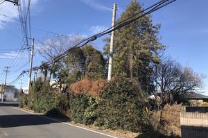 水戸市堀町にて建物解体と伐採工事|LS