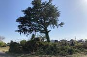 つくば市内にて植栽伐採伐根を兼ねた土地整地工事 LS